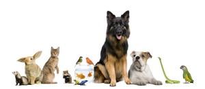 viele Haustiere, wie Hund, Katze, Fische und Kaninchen