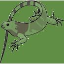 Mehr erfahren über Leguane